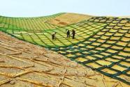 """阿布扎比将试验中国""""沙漠土壤化""""技术"""