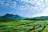 石阡农业与农业特色产业发展