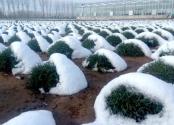 改革开放的绿色启示:蒙草生态模式