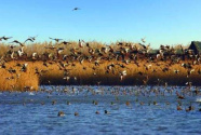 """鳥類遷徙路上的""""加油站""""——上海崇明東灘重建之路"""