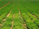 苏州高新区:垒筑产业基石高质量建设特色田园乡村