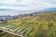 滇西邊境山區·云南省大理市古生村:看得見的美麗 留得住的鄉愁