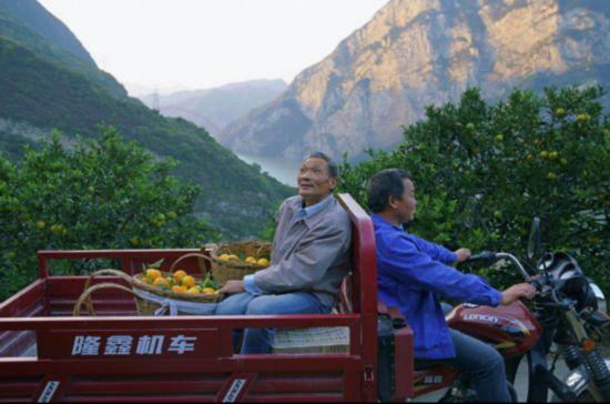 【特稿】三峡移民印记:板车上的3000公里与5万棵树479.png