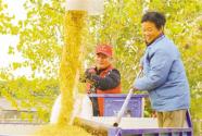 江苏如皋白蒲镇合兴村党员志愿者助农收稻