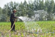 """为产粮,只有超采地下水一手? 内蒙古""""以水换粮""""难持续"""