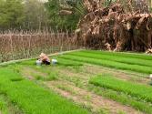 台州银行:春耕春种正当时,助力农户渡难关