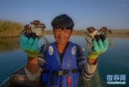 """买买江·艾尼:我在""""死亡之海""""抓螃蟹"""