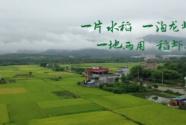 碧桂园:稻虾共作一田双收 促进农业提质增效