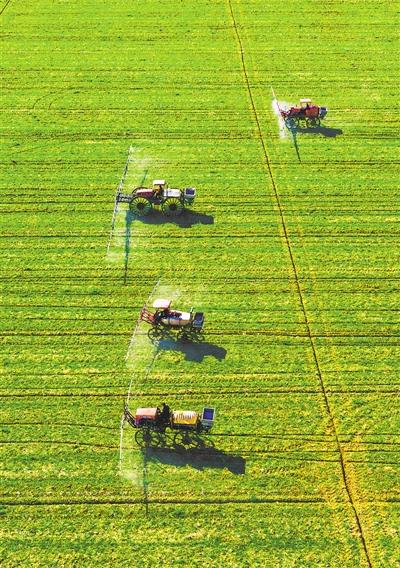 小麦春管 确保增产