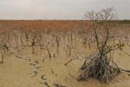 6道禁令擋不住違規施工,廣西北海紅樹林大片消失