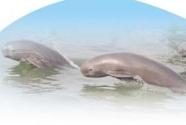 保護長江江豚最直接最有效的措施